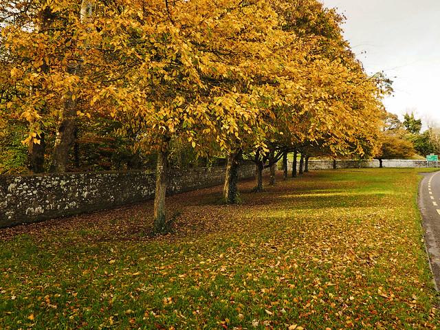 Old Sligo Road, Boyle = autumn
