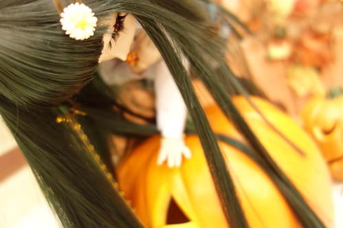 かぼちゃその6。