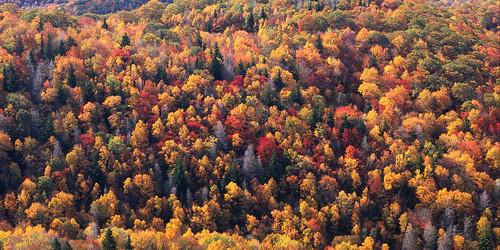 film landscapes fallcolors fineart northcarolina velvia 4x5 largeformat blueridgeparkway 2014 ebonysv45ti jaspcphotography