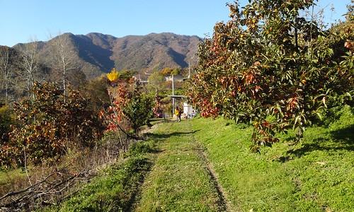 감나무농장 | 광정