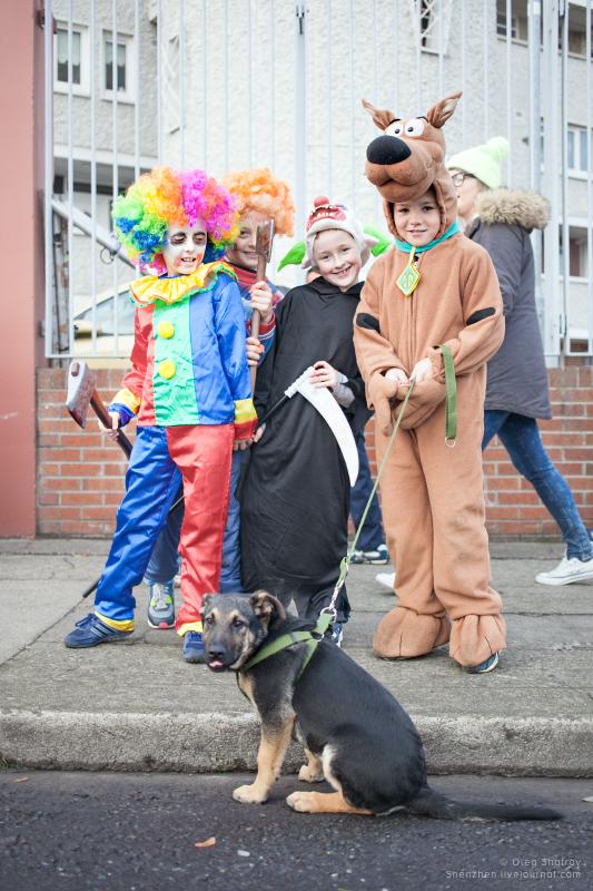 Dublin Halloween - dog holds dog