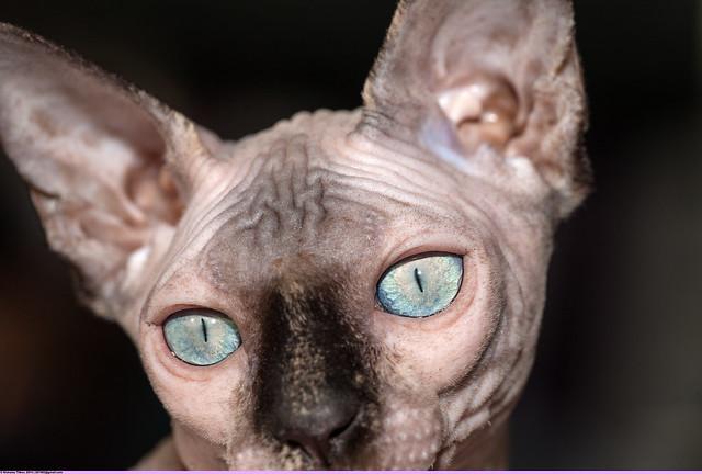 Котята минск
