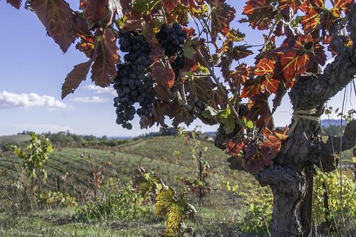 IMG_4230 Ridge Winery, Sonoma County, CA