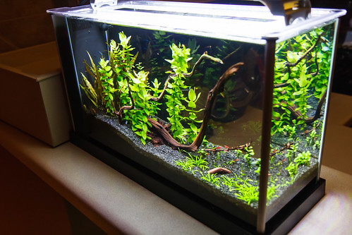 planted fluval spec v aquarium