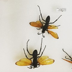 insects, New Mexico Museum of Natural History Collections