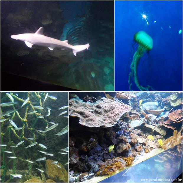 Sea Life London Aquarium 7
