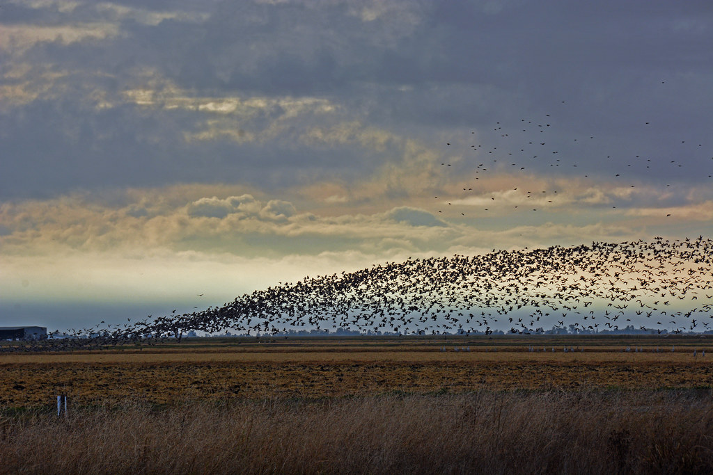 fall migration