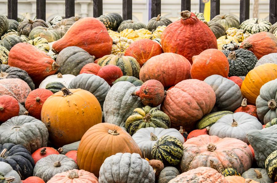 Pumpkinfest-1463