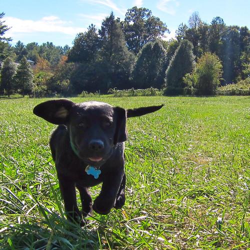 sugarhoney in a field