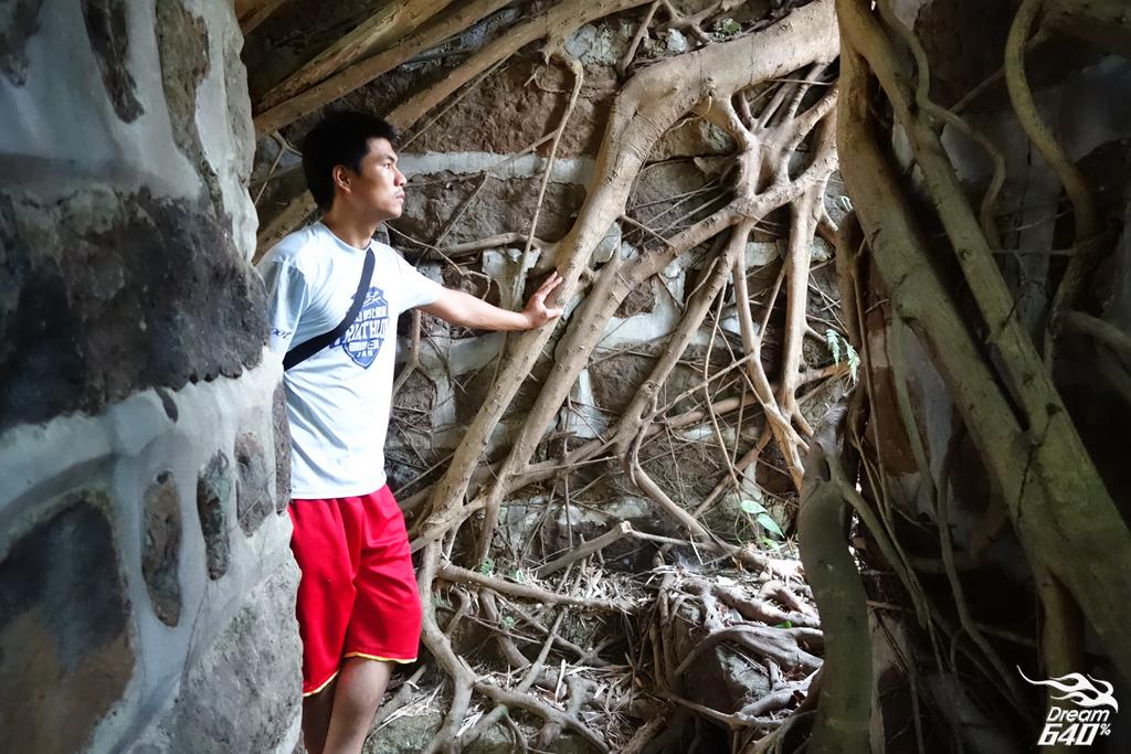 基隆叢林中發現「台灣版吳哥窟」美景。被政府遺棄的「獅球嶺東砲台」遺跡群