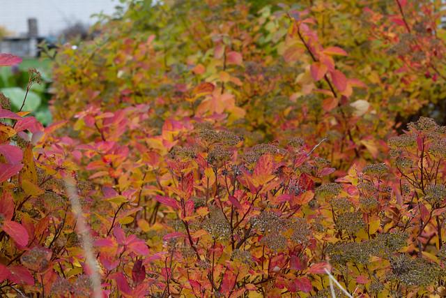 Nami-Nami garden in October 2014. Nami-Nami aed 2014. a. oktoobris.