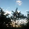 Qui ė tornato il sole. Ma il fango di questi giorni ė indelebile. #buongiorno