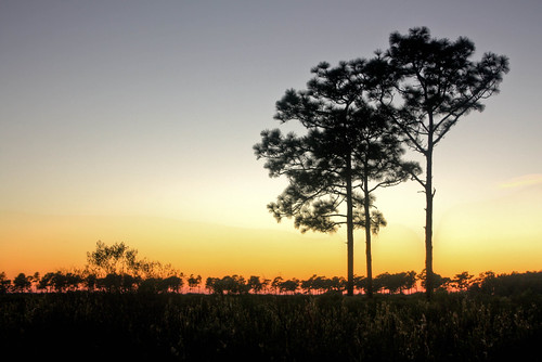 trees sky usa silhouette outdoors florida dusk northamerica osceolacounty peavinetrail