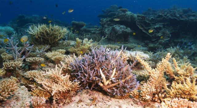 極上サンゴたち♪