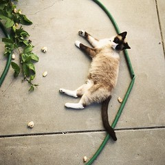 The good life #catsofinstagram #meow #lazydays