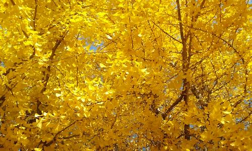 시골집 풍경 | 가을