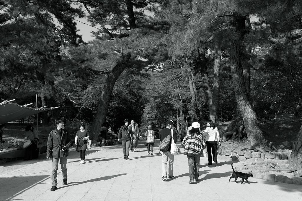クロネコ|島根県出雲市