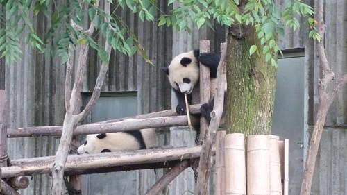 Chengdu-Teil-2-044