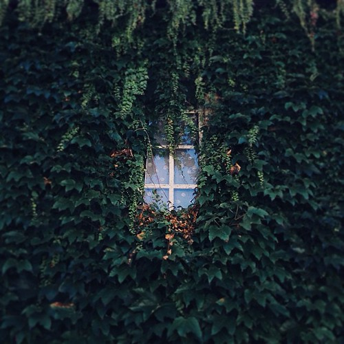 Overgrown castle window #france #frankrijk #dordogne #leverdoyer #chateau #castle #kasteel #window #champsromain #overgrown #vscocam #kawanvillage
