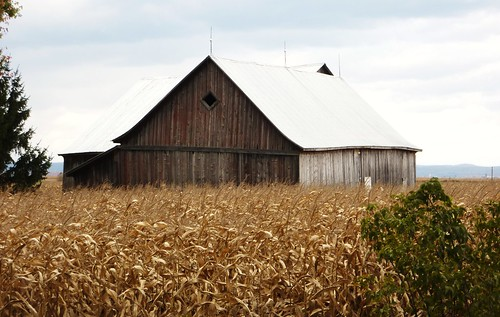 architecture barn landscape country québec paysage campagne ferme strochdelachigan