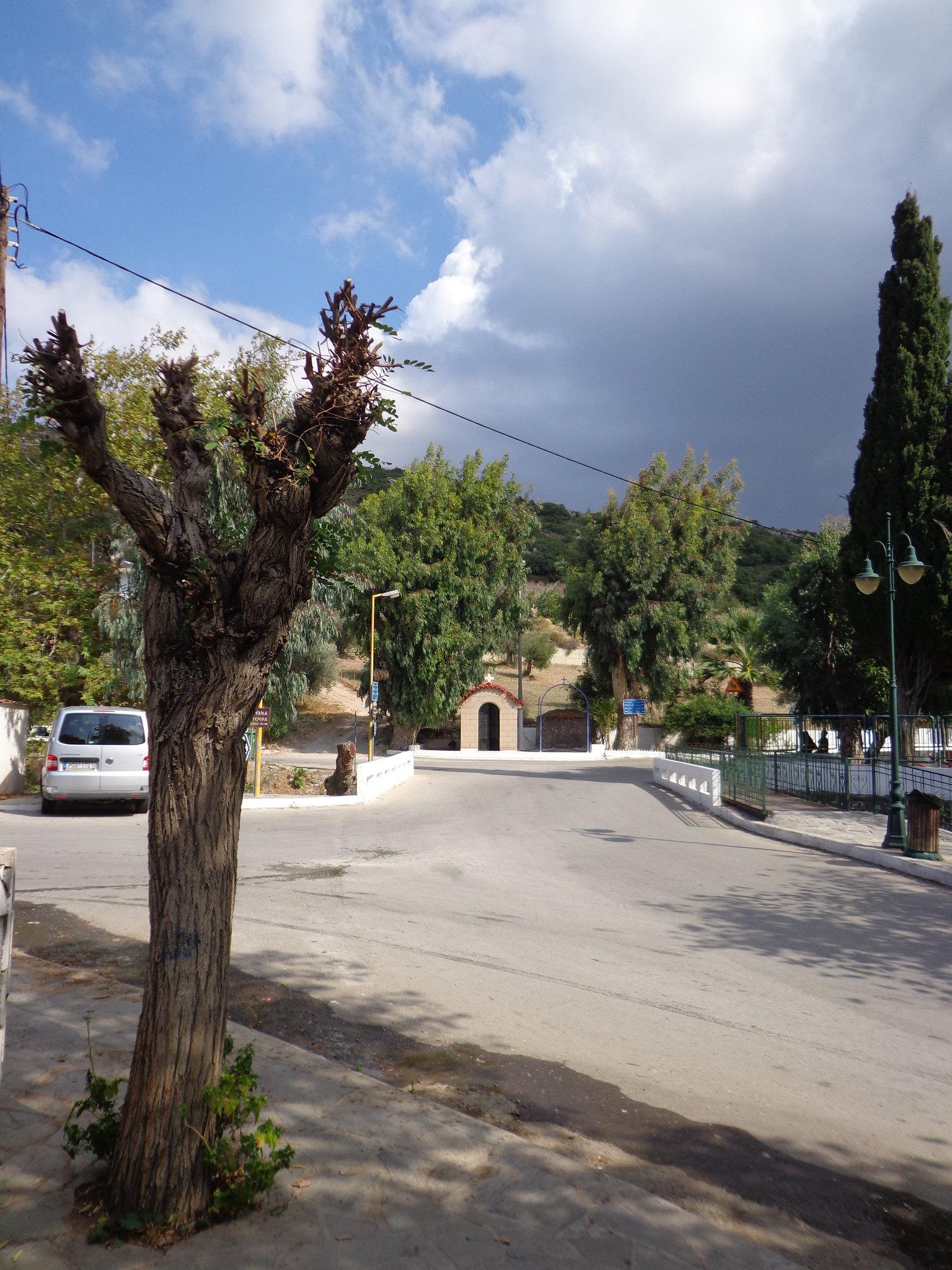 Κλάδεμα δέντρων - Ψίνθος