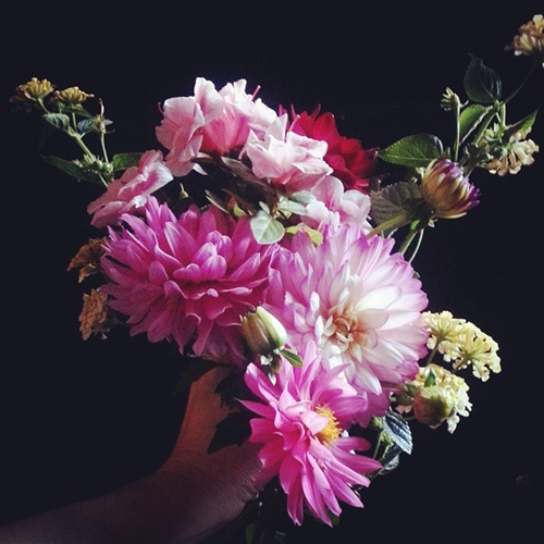 "last.bouquet""height="