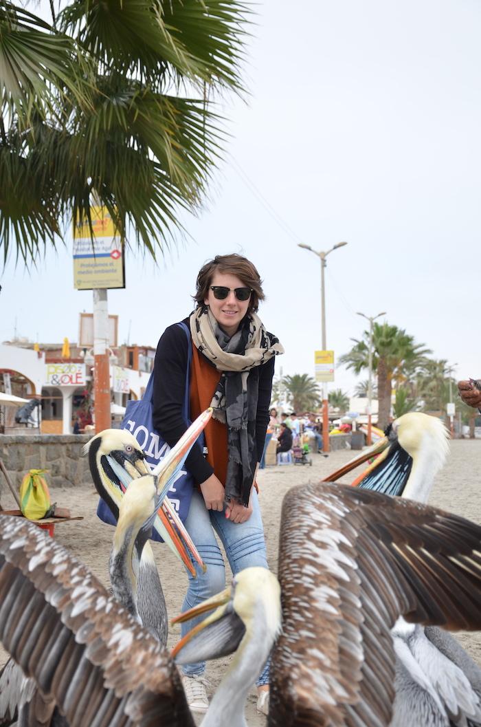 Pelícanos paracas