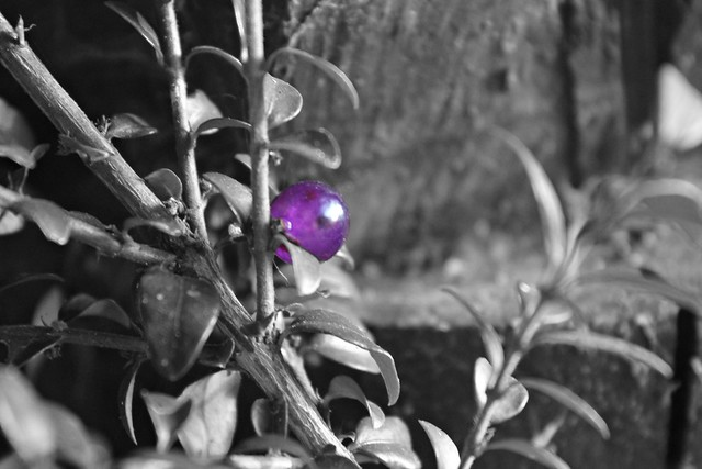 lonely blueberry