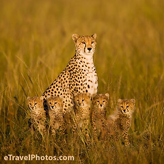 animal family005