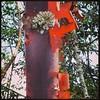 Bark #sunlight #hamgardens #thetron