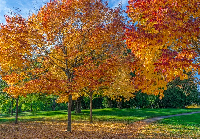 Beautiful fall afternoon