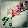 Diagonale florale