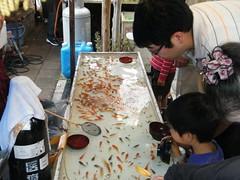 金魚すくい: Goldfish Scoop Game