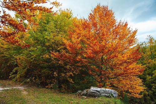 autumn sunset españa fall landscape arbol spain europa europe dusk paisaje otoño león anochecer castillayleón castileandleón
