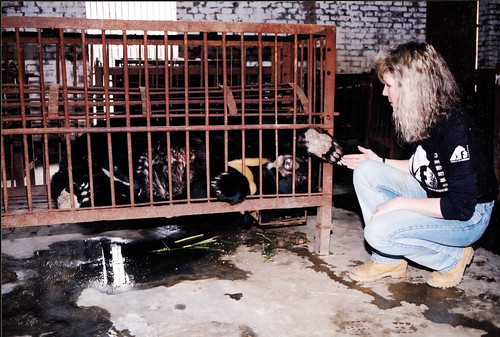 Jasper caged on a farm prior to his rescue by Animals Asia in 2000
