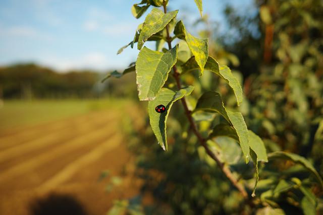 20141026_02_Ladybird