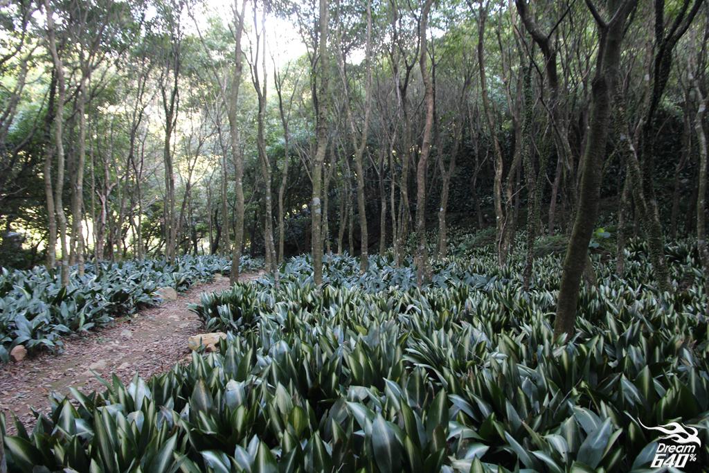 竹子湖青楓步道24