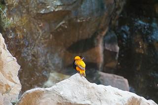 138 Oranje wever