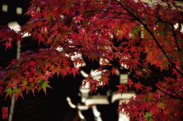 「紅飾り」 仁和寺 - 京都