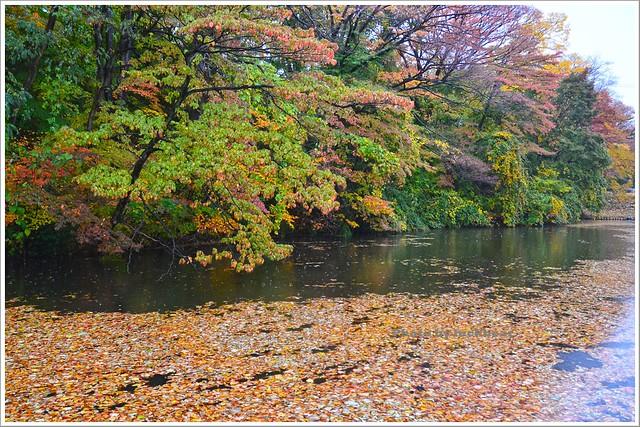 秋田千秋公園002-DSC_3482