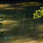 Río Duero. Bosque de ribera