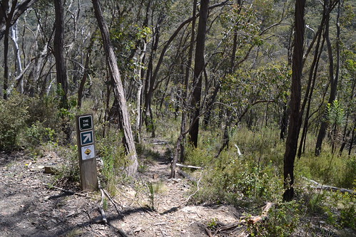 Walking track down to The Spa on the Koetong Creek