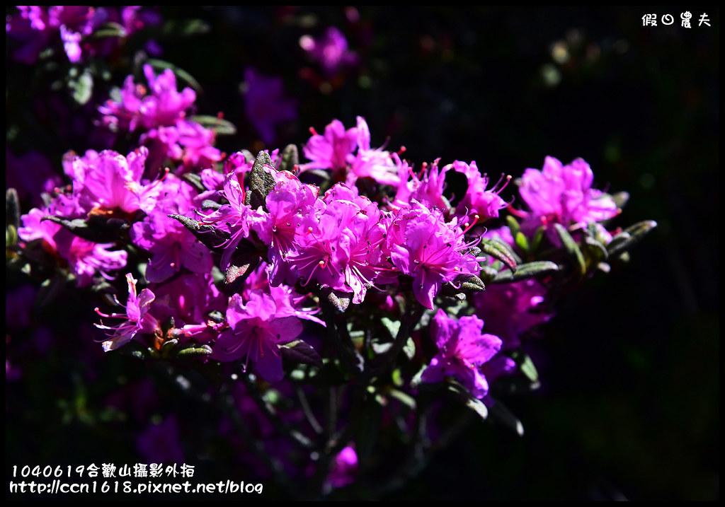 1040619合歡山攝影外拍DSC_1428