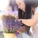 Lavender Festival 6.20.15 7 by Marcie Gonzalez