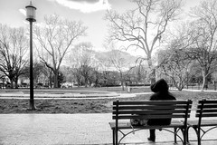 Alone on a bench in winter
