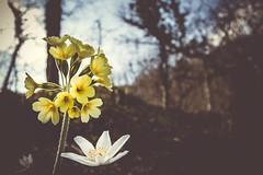 Hello springtime ! - Photo of Champlin