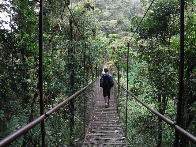 Tree Trek, Boquete
