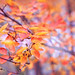 Yellow Fall Leaves, autumn background by ♥Oxygen♥
