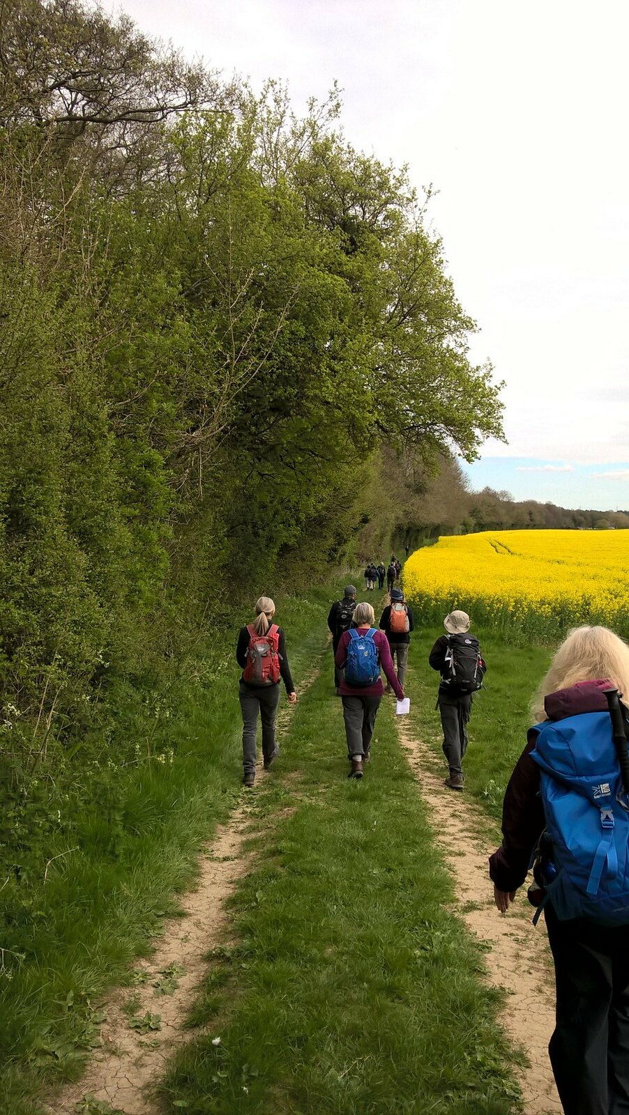 Rapeseed fields near Chilham Saturday Walkers on the Chilham to Canterbury pilgrimage, Good Friday
