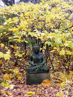 Fall Buddha